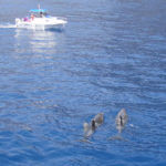 dauphins - excursion aux Canaries